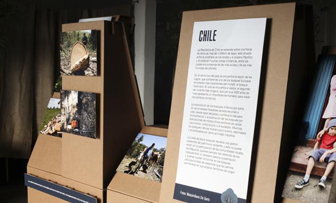 exposición-medio-ambiente-cartonlab-forest-carton-05