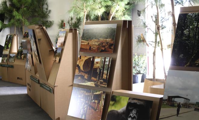 exposición-medio-ambiente-cartonlab-forest-carton-01