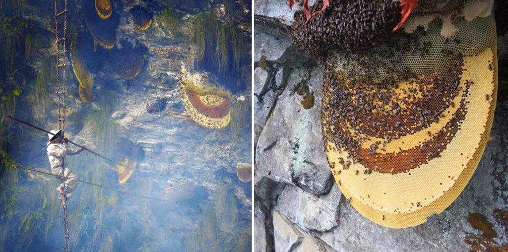 Recolectores de miel de Nepal